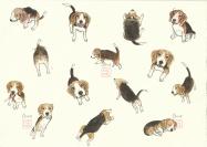 Lou the beagle